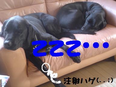 DSC01357.5.15-2.jpg