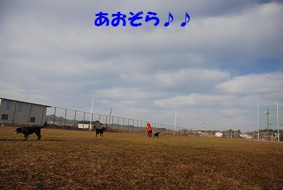 DSC_03701.4-9.jpg