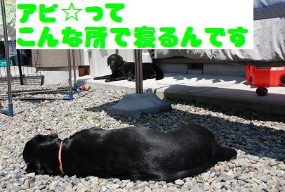 DSC_4989.4.8-5.jpg