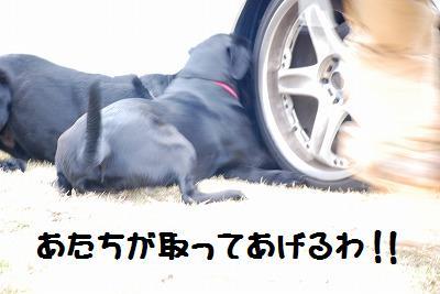 DSC_5360.jpg