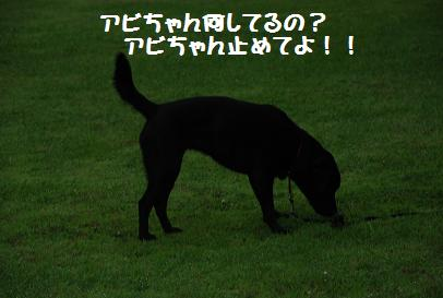 DSC_8438.6.24-8.jpg