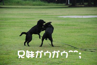 DSC_8514.6.24-14.jpg