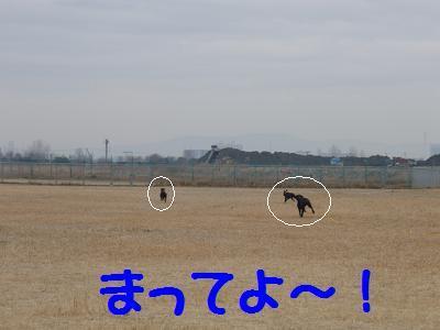 P2260015-4.jpg