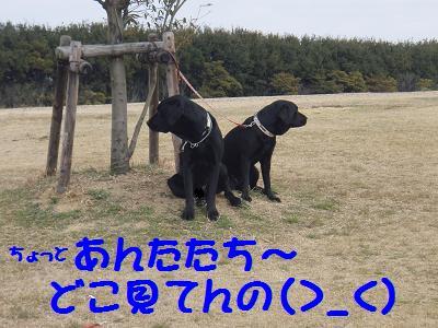 P3040029-4.jpg