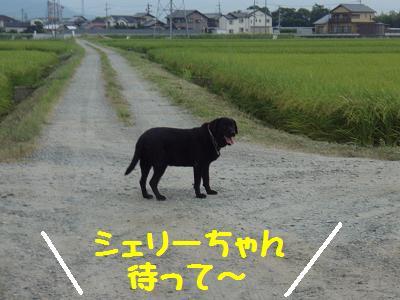 P8100017-1.jpg