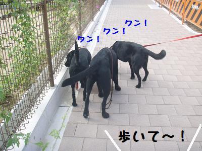 P9050001-1.jpg