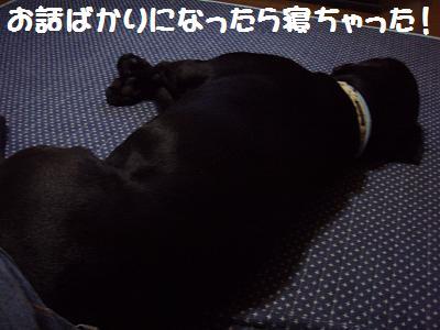 PA050023-3.jpg