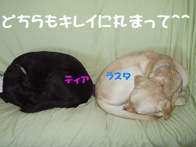 PB210026-6.jpg
