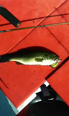 20080807 中原さんクランクで釣ったラージ