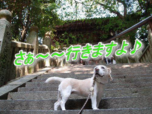 2011・10・09松山1