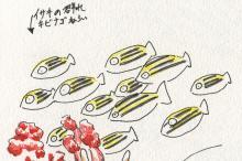 20081104_イサキ_群れ_キビナゴ狙い.jpg