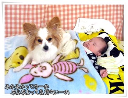 004-20110322.jpg