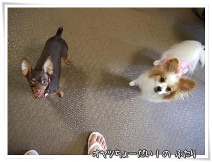 012-20110727Howls.jpg