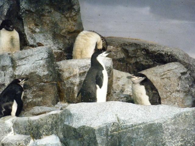 岩場にいるペンギン