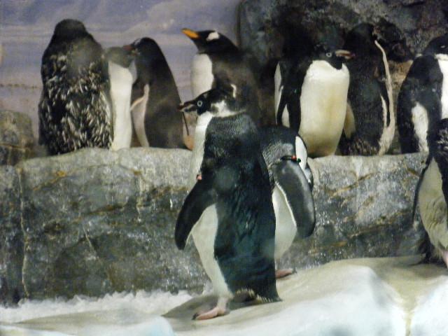 ペンギンっていいな!!。3