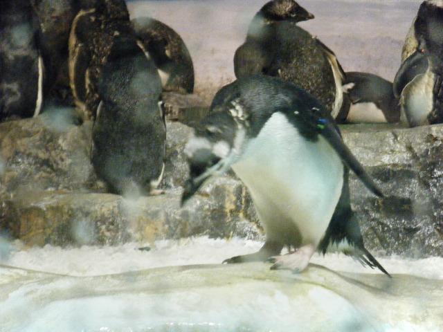 ペンギンっていいいな!!。5