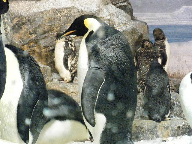 ペンギンっていいな!!。8