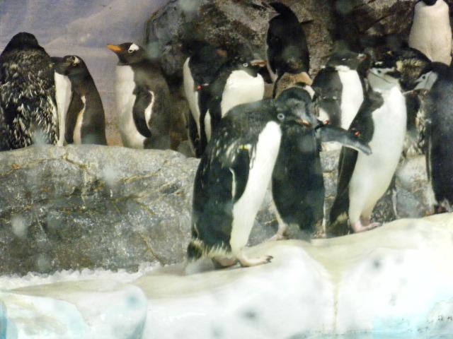 ペンギンっていいな!!。9