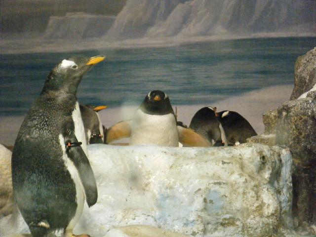 ペンギンのすばらしさを