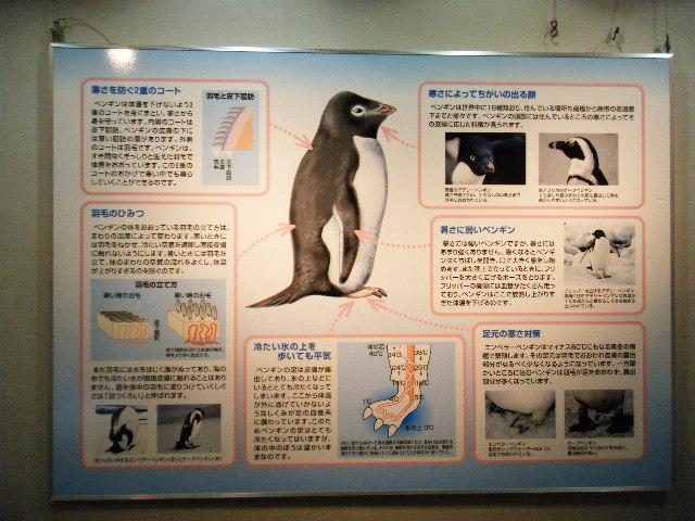 ペンギン説明1