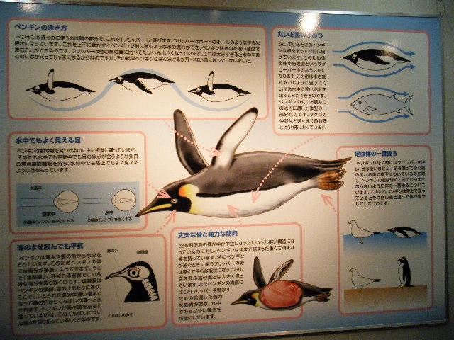 ペンギン説明2