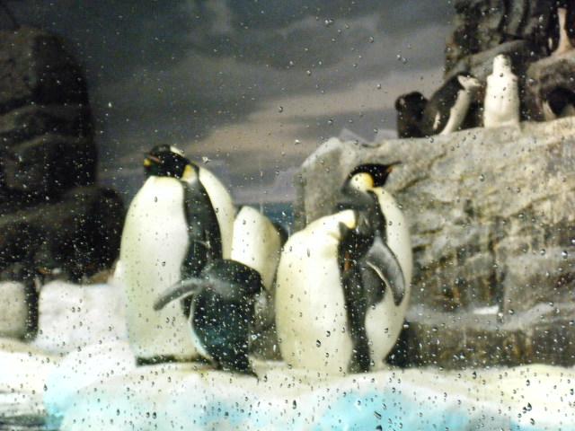 ファイナルペンギン1