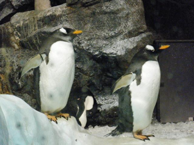 ファイナルペンギン2