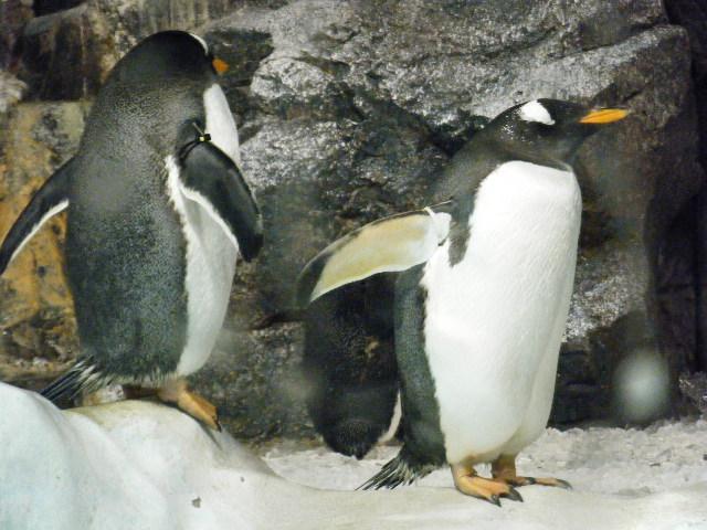 ありがとうペンギン1