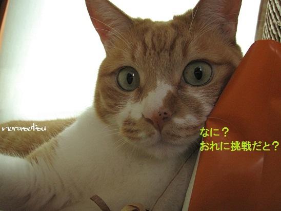 004_20110630181026.jpg