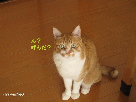 006_20110419101436.jpg
