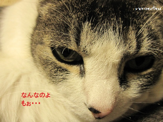 011_20110616105906.jpg