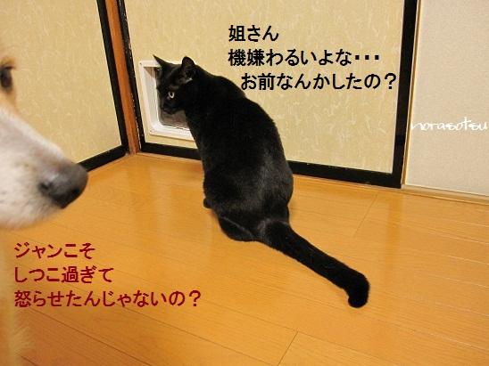 013_20110622063209.jpg