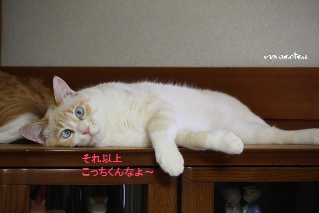 024_20110622164557.jpg