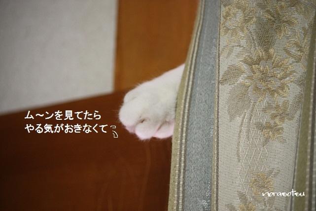 033_20110715095116.jpg