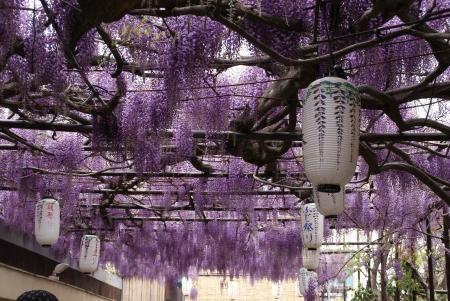 0430_fuji6.jpg