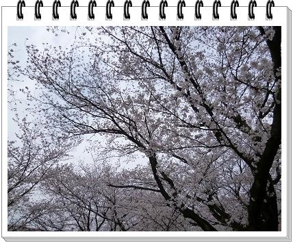 2012040807.jpg
