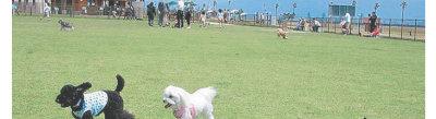 海浜公園ドッグラン[1]