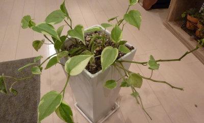 観葉植物[1]