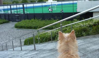 サッカーを見るマー坊[1]