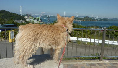 ⑧looking at the bridge[1]