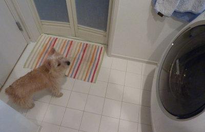 洗濯機見る2[1]