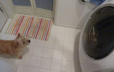 洗濯機見る3[1]