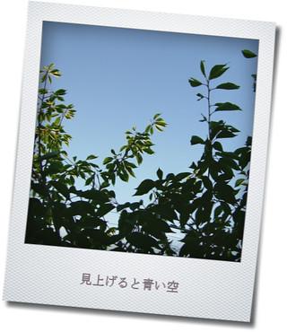 青い空と桜の木