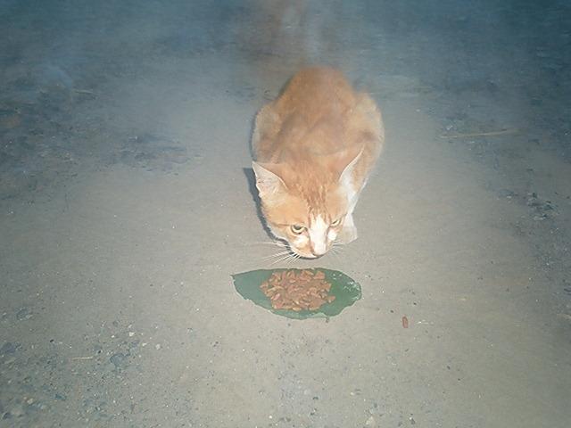 大猫チャォ君♂