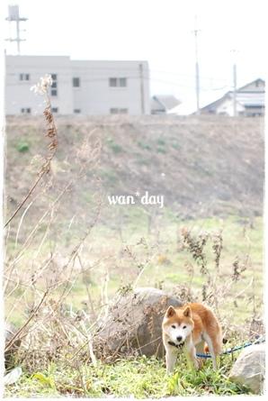 22-2_20090202200525.jpg
