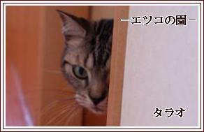 20110308084323257.jpg