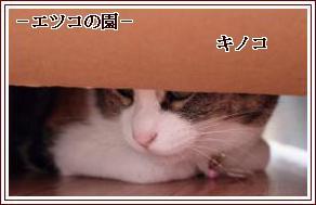 201103080843333c2.jpg