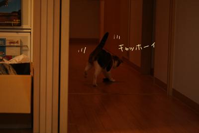 IMG_8123-2.jpg