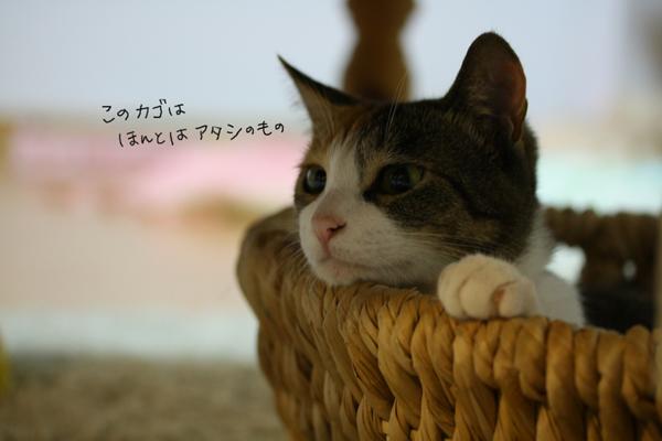 IMG_8728.jpg