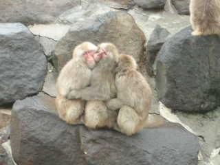 猿山…猿溜まり(ぉ